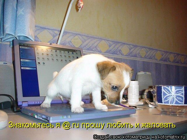 Котоматрица: Знакомьтесь я @.ru прошу любить и жаловать