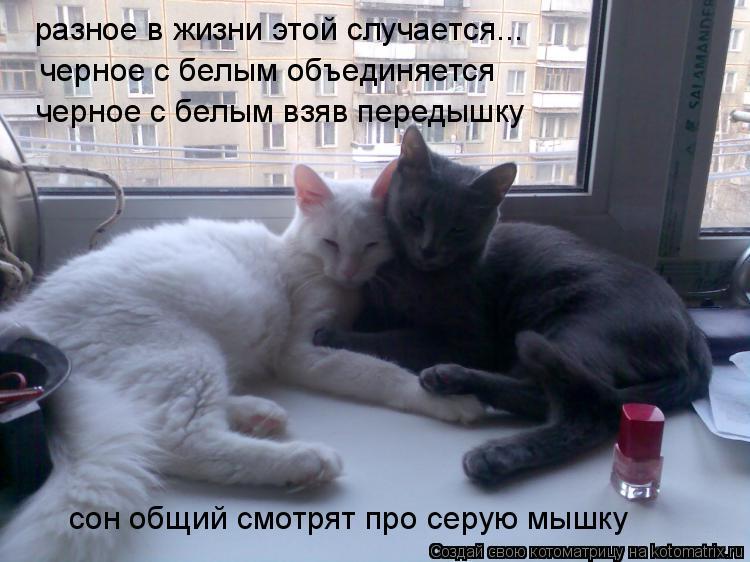 Котоматрица: разное в жизни этой случается... черное с белым объединяется черное с белым взяв передышку сон общий смотрят про серую мышку