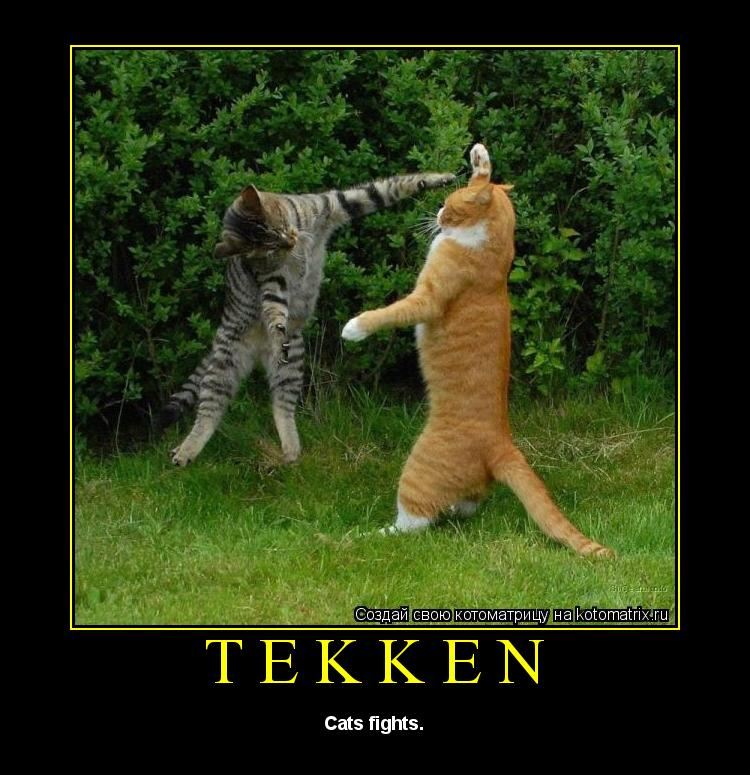 Котоматрица: Tekken Cats fights.