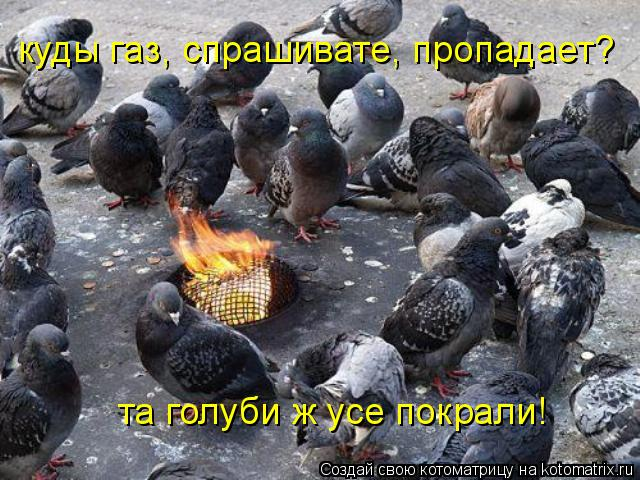 Котоматрица: та голуби ж усе покрали! куды газ, спрашивате, пропадает?