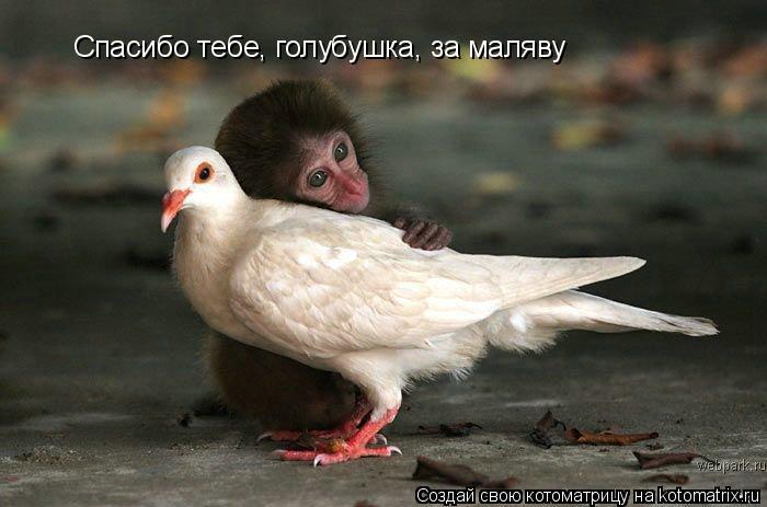 Котоматрица: Спасибо тебе, голубушка, за маляву