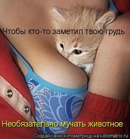 Котоматрица: Чтобы кто-то заметил твою грудь Необязательно мучать животное