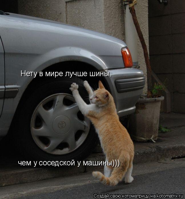Котоматрица: Нету в мире лучше шины,  чем у соседской у машины)))