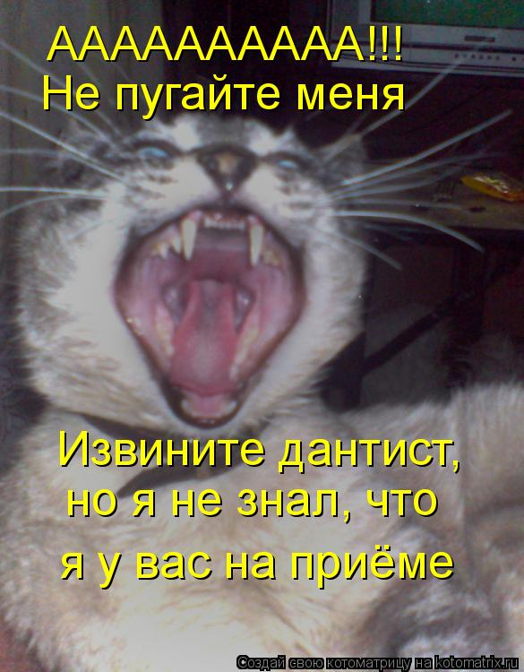 Котоматрица: АААААААААА!!! Не пугайте меня Извините дантист, но я не знал, что я у вас на приёме