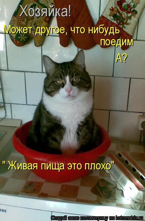 """Котоматрица: Хозяйка! Может другое, что нибудь поедим А? """" Живая пища это плохо"""""""
