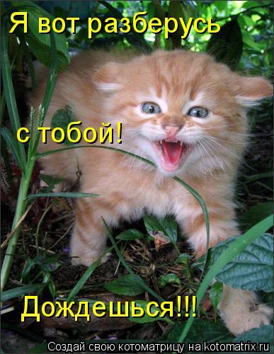 Котоматрица: Я вот разберусь Дождешься!!!  с тобой!
