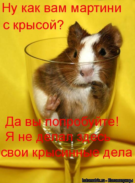Котоматрица: Ну как вам мартини с крысой? Да вы попробуйте! Я не делал здесь свои крысинные дела