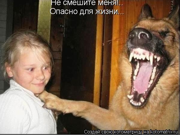 Котоматрица: Не смешите меня!.. Опасно для жизни...