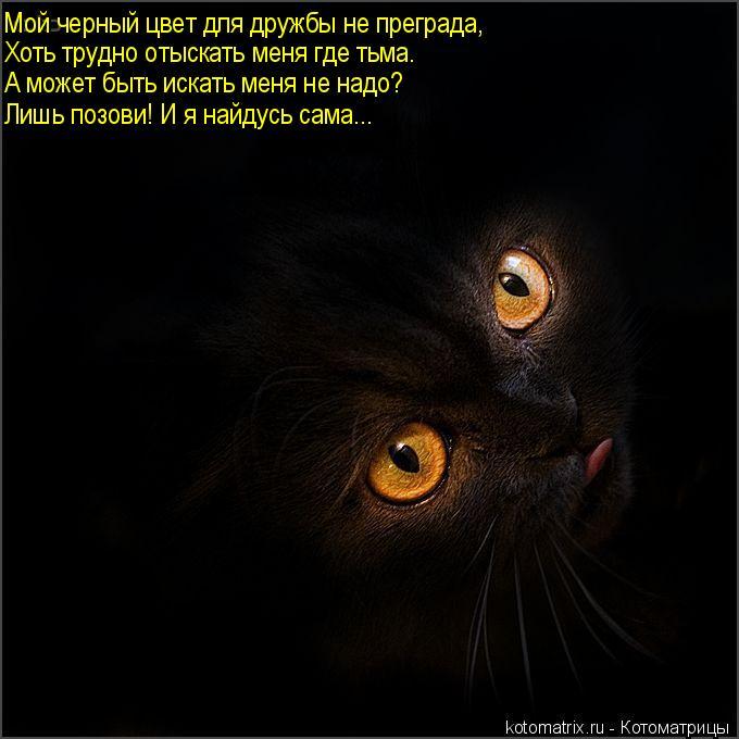 Котоматрица: Мой черный цвет для дружбы не преграда, Хоть трудно отыскать меня где тьма. А может быть искать меня не надо? Лишь позови! И я найдусь сама...