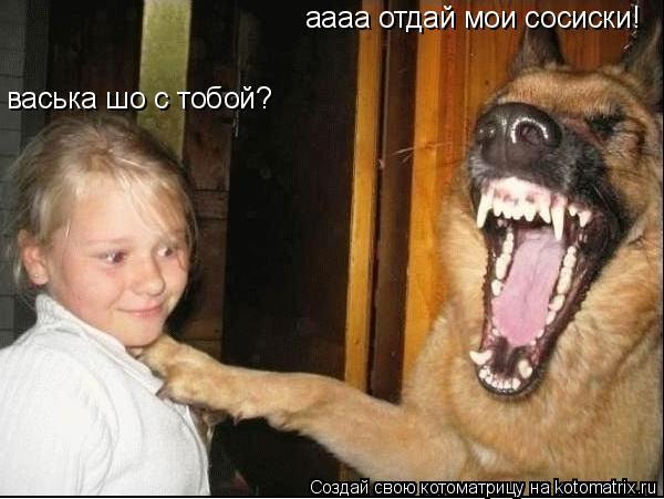 Котоматрица: аааа отдай мои сосиски! васька шо с тобой?