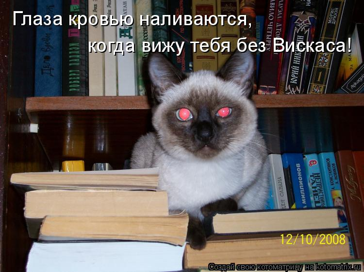 Котоматрица: Глаза кровью наливаются,  когда вижу тебя без Вискаса!