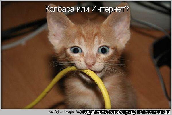 Котоматрица: Колбаса или Интернет?