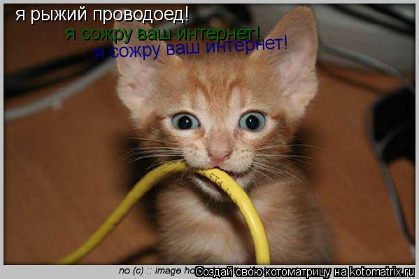 Котоматрица: я рыжий проводоед!  я сожру ваш интернет!  я сожру ваш интернет!