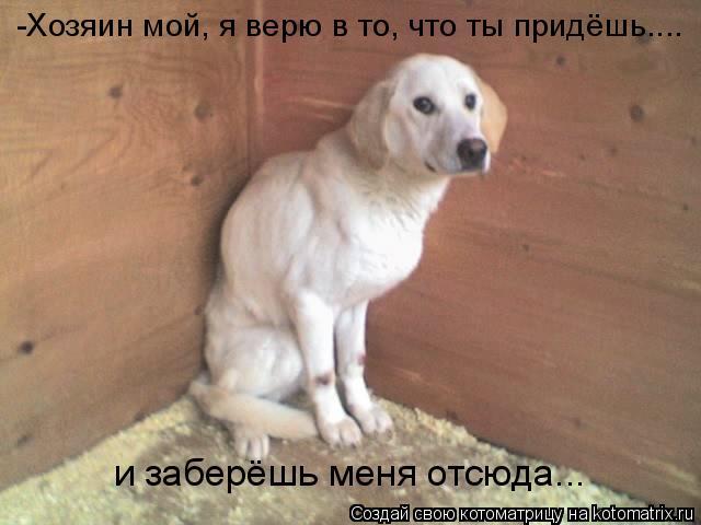 Котоматрица: -Хозяин мой, я верю в то, что ты придёшь.... и заберёшь меня отсюда...
