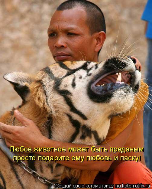 Котоматрица: Любое животное может быть преданым просто подарите ему любовь и ласку!