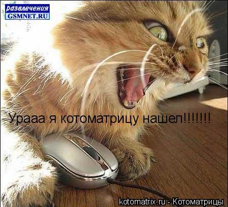 Котоматрица: Урааа я котоматрицу нашел!!!!!!!