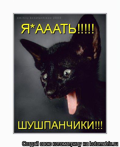 Котоматрица: Я*АААТЬ!!!!! ШУШПАНЧИКИ!!!