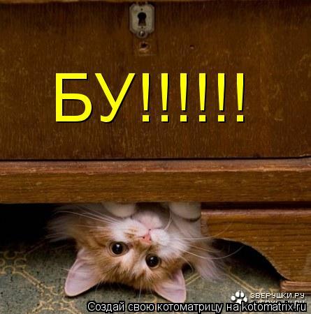 Котоматрица: БУ!!!!!!