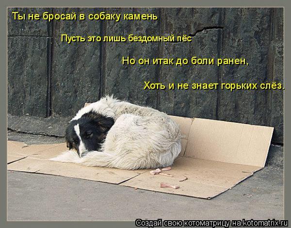 Котоматрица: Пусть это лишь бездомный пёс Ты не бросай в собаку камень Но он итак до боли ранен,  Хоть и не знает горьких слёз.