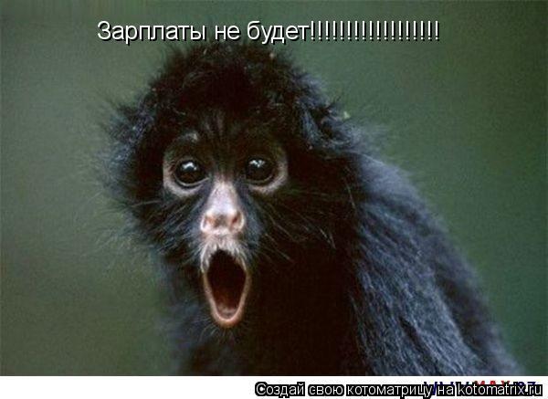 Котоматрица: Зарплаты не будет!!!!!!!!!!!!!!!!!!