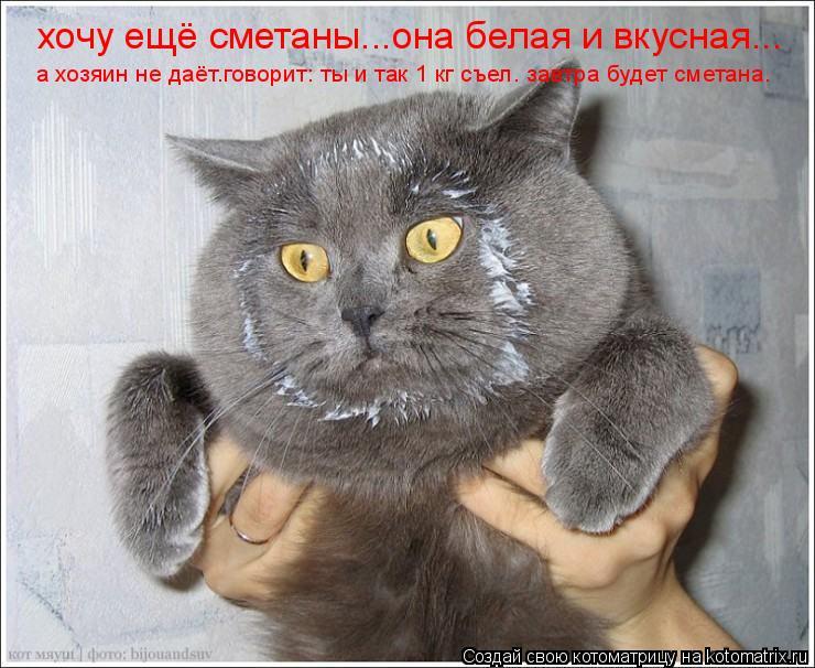Котоматрица: хочу ещё сметаны...она белая и вкусная... а хозяин не даёт.говорит: ты и так 1 кг съел. завтра будет сметана.