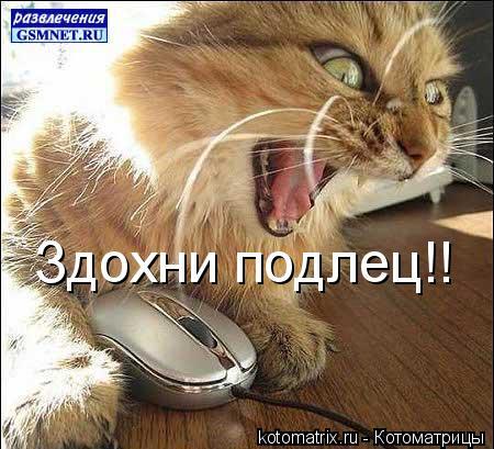 Котоматрица: Здохни подлец!!