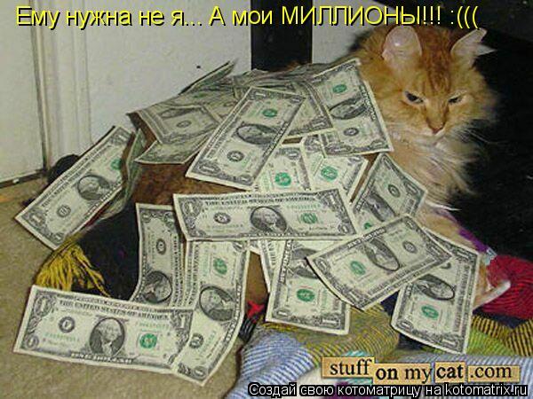 Котоматрица: Ему нужна не я... А мои МИЛЛИОНЫ!!! :(((