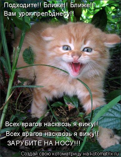 Котоматрица: Подходите!! Ближе!! Ближе!! Вам урок преподнесу!! ЗАРУБИТЕ НА НОСУ!!! Всех врагов насквозь я вижу!! Всех врагов насквозь я вижу!!