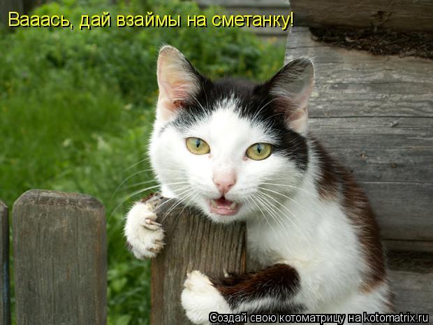 Котоматрица: Вааась, дай взаймы на сметанку!