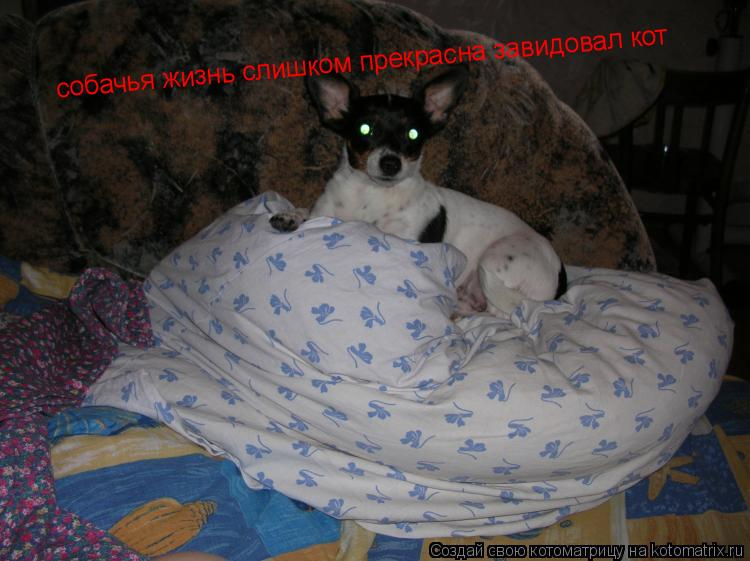 Котоматрица: собачья жизнь слишком прекрасна завидовал кот