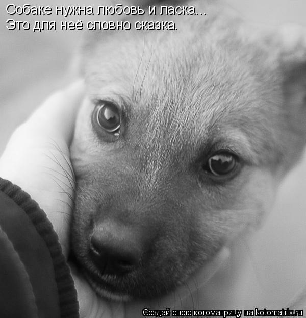 Котоматрица: Собаке нужна любовь и ласка... Это для неё словно сказка.