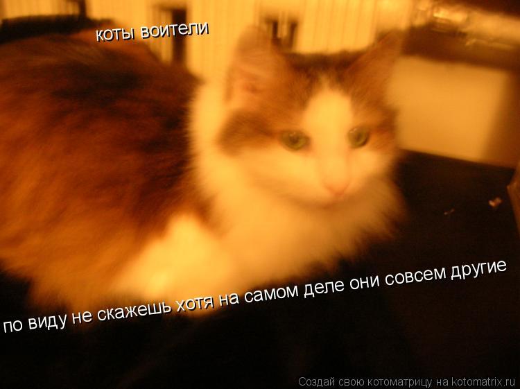 Котоматрица: коты воители по виду не скажешь хотя на самом деле они совсем другие