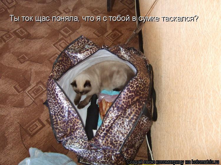 Котоматрица: Ты ток щас поняла, что я с тобой в сумке таскался?