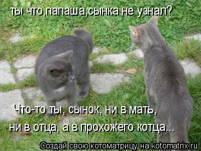 Котоматрица: ты что,папаша,сынка не узнал? Что-то ты, сынок, ни в мать,  ни в отца, а в прохожего котца...