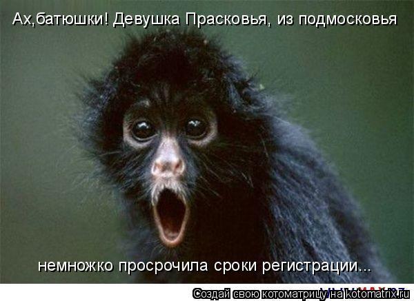 Котоматрица: Ах,батюшки! Девушка Прасковья, из подмосковья немножко просрочила сроки регистрации...