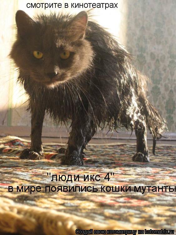 """Котоматрица: смотрите в кинотеатрах """"люди икс 4"""" в мире появились кошки мутанты"""
