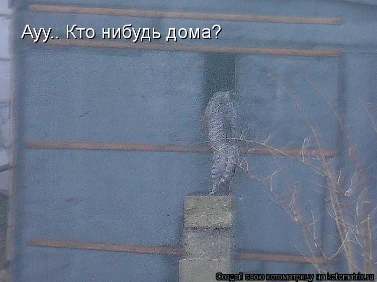 Котоматрица: Ауу.. Кто нибудь дома?