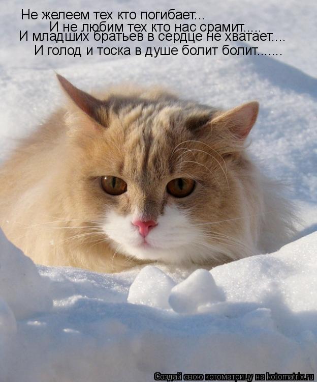 Котоматрица: Не желеем тех кто погибает... И не любим тех кто нас срамит..... И голод и тоска в душе болит болит....... И младших братьев в сердце не хватает....