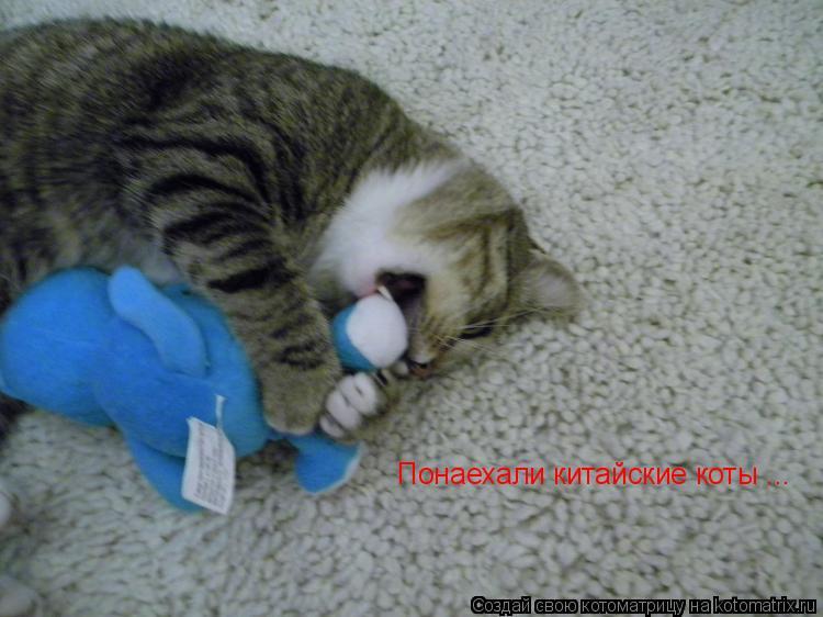 Котоматрица: Понаехали китайские коты ...