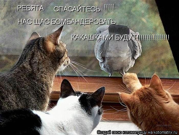 Котоматрица: РЕБЯТА СПАСАЙТЕСЬ !!!!!  НАС ЩАС БОМБАНДЕРОВАТЬ КАКАШКАМИ БУДУТ!!!!!!!!!!!!!!!!