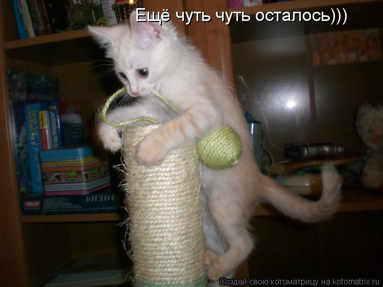 Котоматрица: Ещё чуть чуть осталось)))