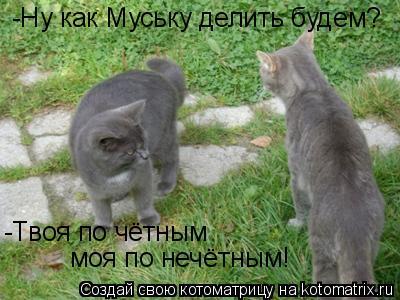 Котоматрица: моя по нечётным! -Ну как Муську делить будем? -Твоя по чётным
