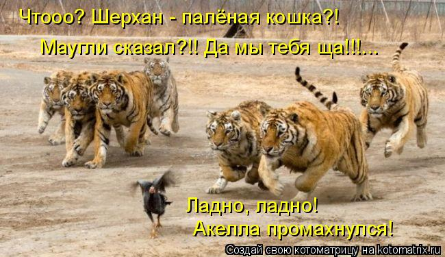 Котоматрица: Чтооо? Шерхан - палёная кошка?! Маугли сказал?!! Да мы тебя ща!!!... Ладно, ладно! Акелла промахнулся!