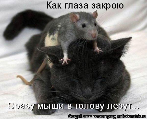 Котоматрица: Как глаза закрою Сразу мыши в голову лезут...