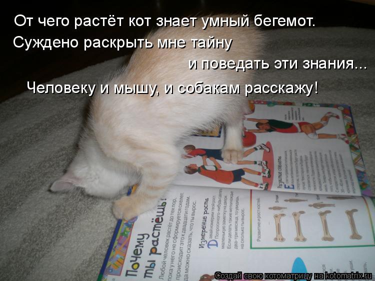 Котоматрица: От чего растёт кот знает умный бегемот. Суждено раскрыть мне тайну и поведать эти знания... Человеку и мышу, и собакам расскажу!