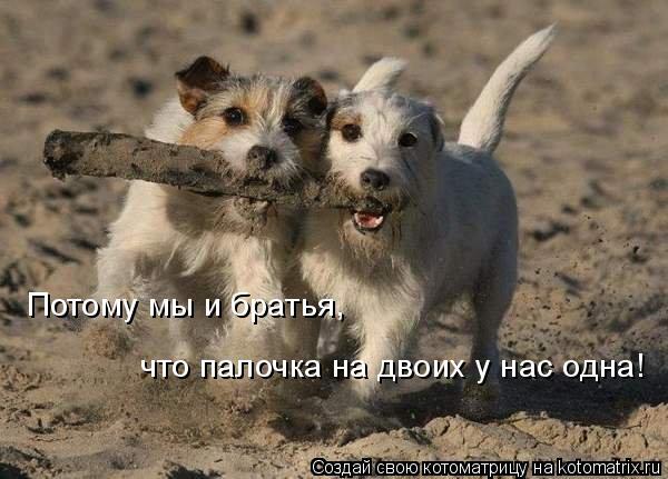 Котоматрица: Потому мы и братья, что палочка на двоих у нас одна!
