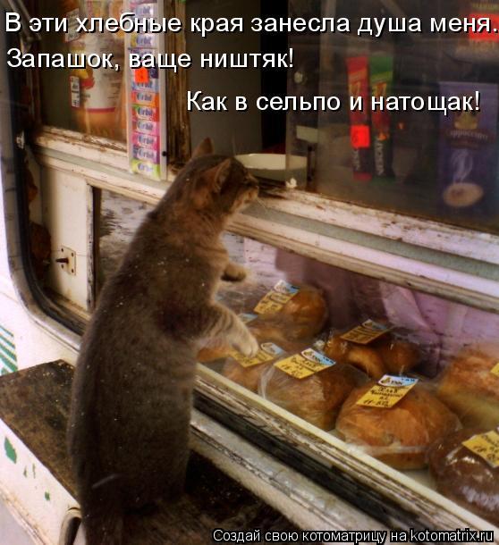 Котоматрица: В эти хлебные края занесла душа меня. Запашок, ваще ништяк! Как в сельпо и натощак!