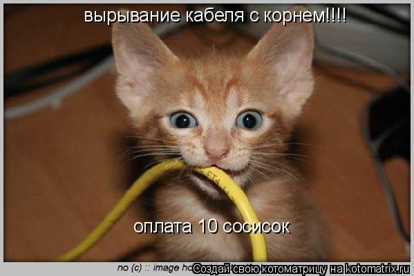 Котоматрица: вырывание кабеля с корнем!!!! оплата 10 сосисок
