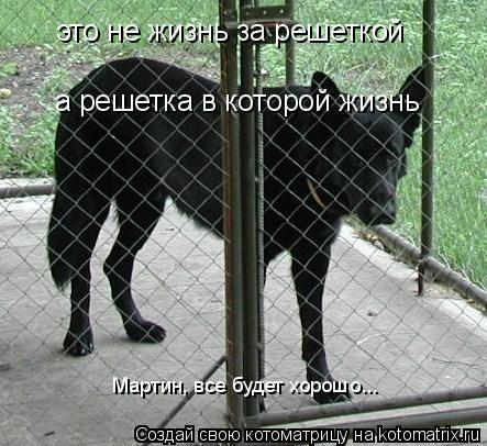 Котоматрица: это не жизнь за решеткой а решетка в которой жизнь Мартин, все будет хорошо...