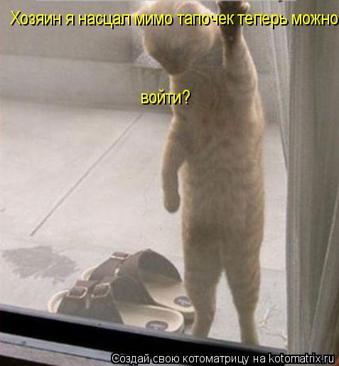 Котоматрица: Хозяин я насцал мимо тапочек теперь можно войти?  войти?  войти?